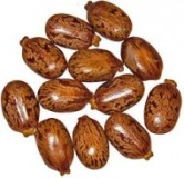 Castor beans by H. Zell (CC)