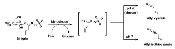 Mechanism of sinigrin hydrolysis