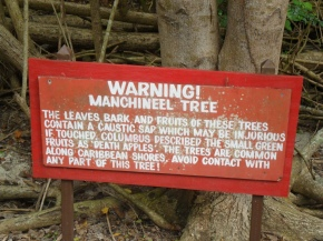 The Manchineel Tree, Proof That Mother Nature Hates Us