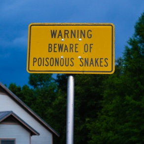 Poisonous Snakes by Justin Brower