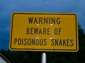 That's a Venomous Snake That Just Bit You, Not a PoisonousOne