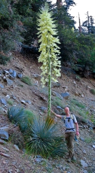 Agave on the hike up Mt. San Antonio, with your's truly (circa 2003). For comparison, I'm 6'2