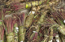 Bundles of khat by US DEA (publc domain)