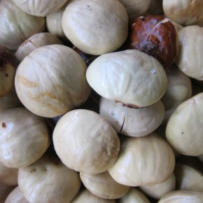 Of Djenkol Beans and Djenkolism: The Southeast Asian Delicacy that Poisons
