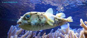 Tetrodotoxin: The Paralytic Pufferfish Poison