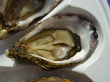 Oysters by Kamel15