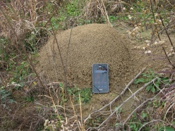 Fire Ant Hill by Vicki DeLoach (CC BY-NC-ND-2.0)