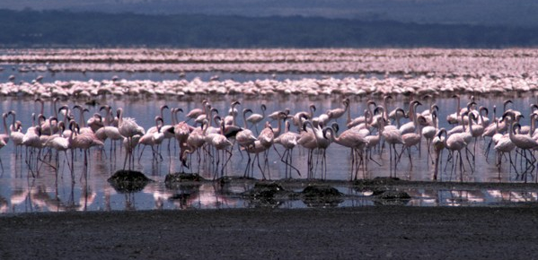 Lake Bogoria by Bob Walker (CC BY-SA-2.5)